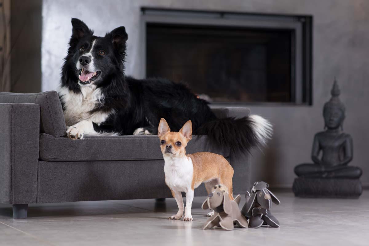 fauteuil design chiens