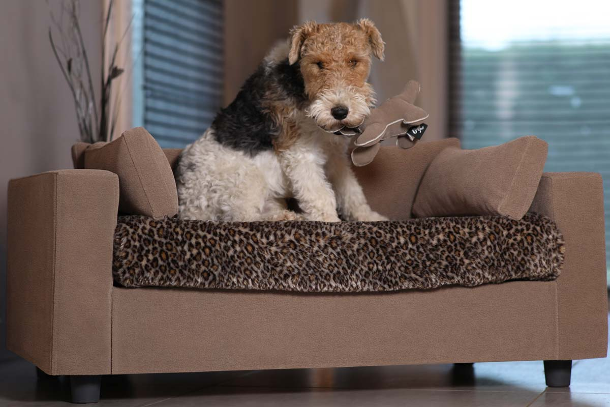 original modern removable dog armchair pack tenderness