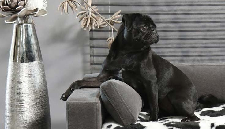 Why choose a sofa for your dog or cat