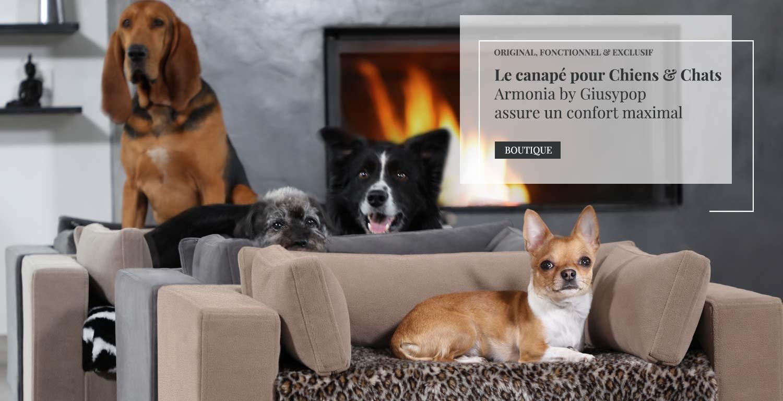 luxe chien